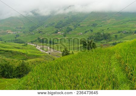 View From The Top On Mountain Valley With Rice Terraces. Nature Background. Vietnam