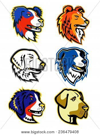 Mascot Icon Illustration Of Head Of Different Types Of Sheepdogs Like The Anatolian Shepherd Dog,  A