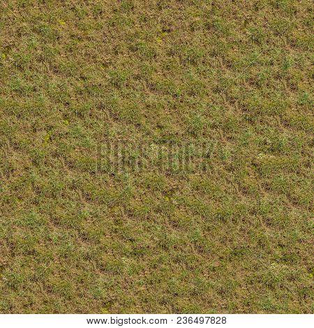 Spring Germinating Grass. Closeup. Seamless Tileable Texture