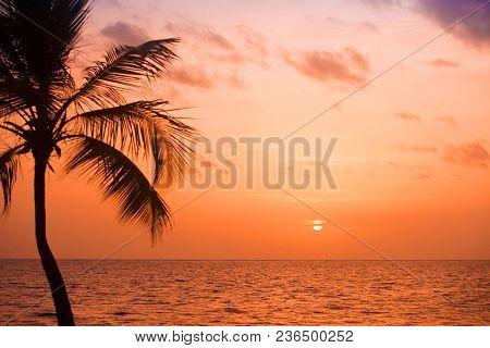 Palm Trees Silhouette At Sunset Tropical Beach. Orange Sunset