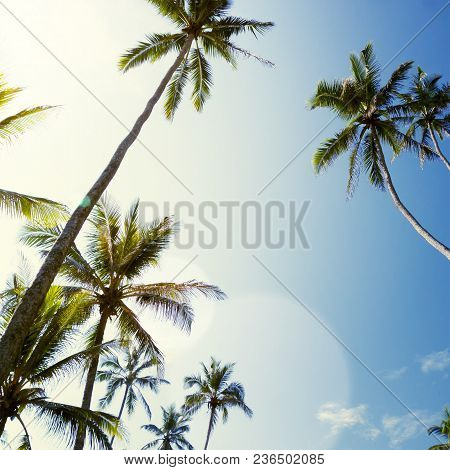 Tropical Beach With Palm Trees. Beautifull Sea Sunset Nature Background