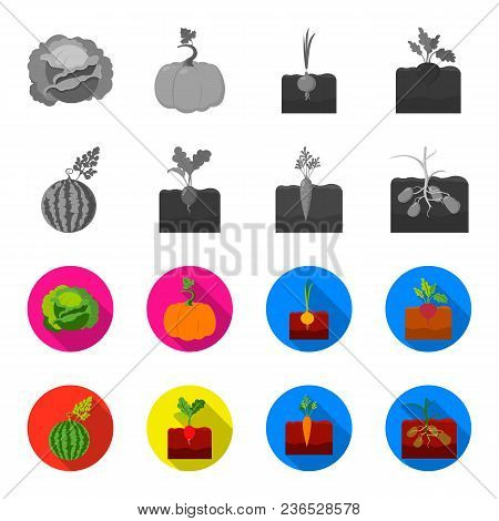 Watermelon, Radish, Carrots, Potatoes. Plant Set Collection Icons In Monochrome, Flat Style Vector S