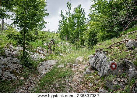 In The Forest There Are Marks For Tourists, So That They Do Not Falter.