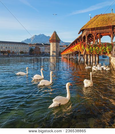 Swans At The Famous Chapel Bridge Over The Reuss River In The City Of Lucerne, Switzerland, Summit O