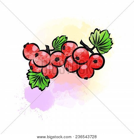 Colored Drawing Of Currant. Fresh Design Of Colorful Fruits Made In Watercolor Style. Modern Marketi