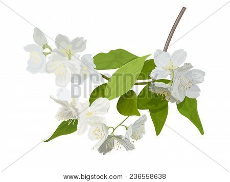 The Blossoming Season. Blooming Tree With Delicate White Flowers. Twig With Flower Buds. Green And W