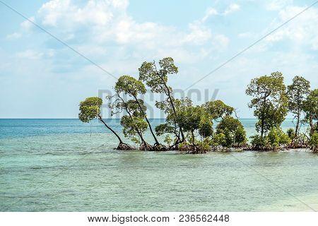 Mangrove Tree At Vijaynagar Beach At Havelock Island, Andaman And Nicobar, India