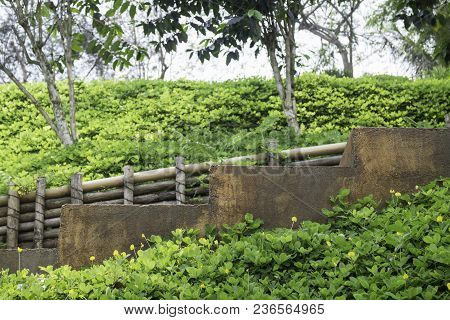 Step Of Brown Stone Stairs With Green Plant Beside The Walk Way, Stock Photo