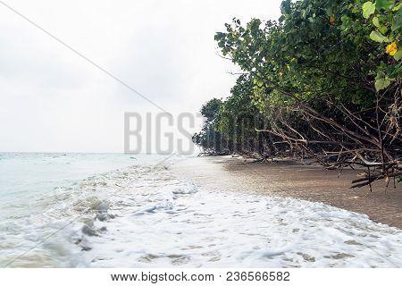 Fallen Trees At Elephant Beach, Havelock Island, Andaman And Nicobar, India