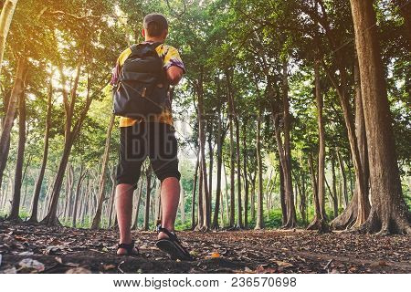 A Man Is A Tourist In A Pine Forest With A Backpack. A Hiking Trip Through The Forest. Tropical Rese