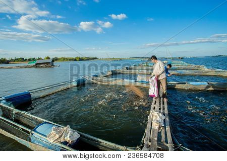 Kalasin, Thailand ,31 December 2017,a Man Throws Feeds The Fish In A Commercial Farm In River In Kal