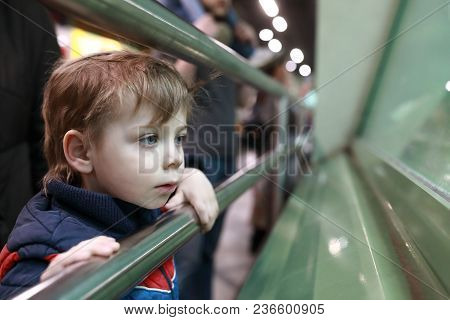Interested Child In Zoo