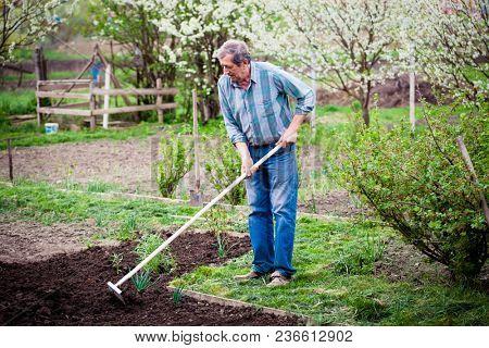elderly man working in spring garden