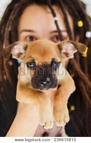 A Girl With Dreadlocks Holds A Puppy Dog In Front Of Her Face. Big Eyes