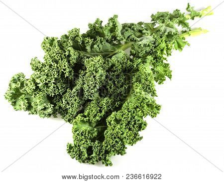 Close-up View Of Kale Leaves. Kale Or Leaf Cabbage Are Cultivars Of Cabbage, Brassica Oleracea, Grow
