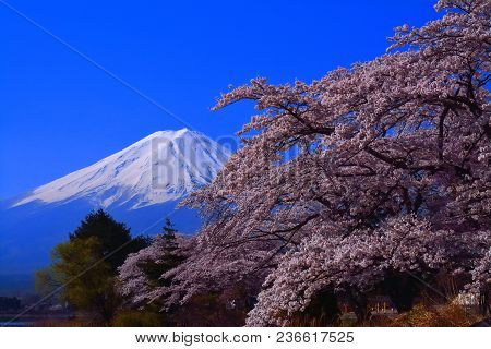 Mt. Fuji And Cherry Blossoms Blue Sky Nagasaki Park Lake Kawaguchi Japan 04/10/2018