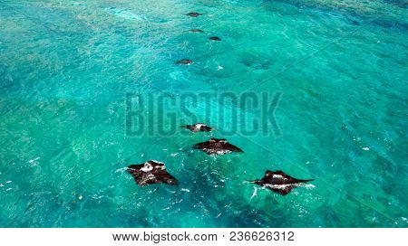 Aerial view of two Manta rays swimming in Nusa Penida near Bali .