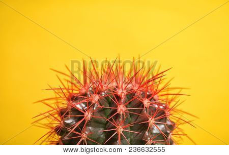 Beautiful Cactus On Color Background