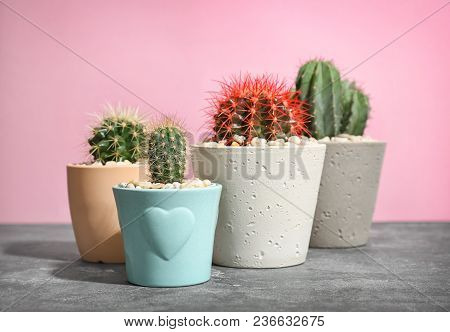 Beautiful Cacti On Table Against Color Background