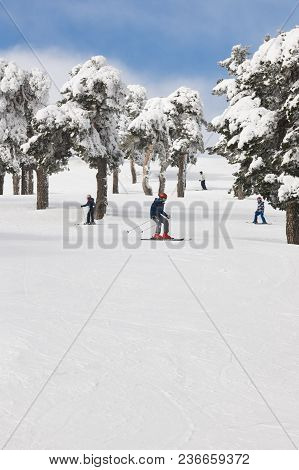People Skiing On A Forest Slope. White Mountain Landscape. Winter Sport