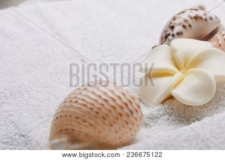 spa concept with shells