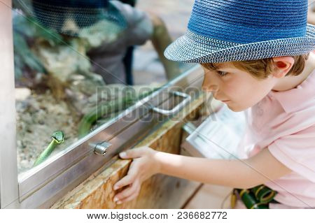 Little Kid Boy Admire Poisonous Green Snake In Terrarium Through The Glass In Zoo. Happy School Chil