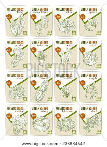 Green Salads Or Vegetables Price Cards Sketch Design Templates For Farm Market Or Grocery Store. Vec