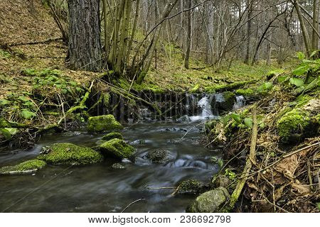 Small Brook In Forest. Peaceful Brook In Early Spring Forest. Brook With Mossy Rocks And Clean Flowi