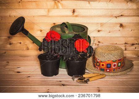 Flower Seedlings, Hat, Gardening Tools And Watering Can On Wooden Background