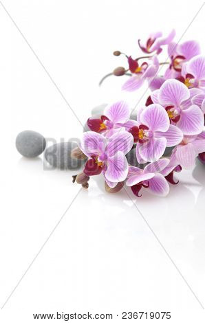 Branch pink striped orchid and gray stones on white background