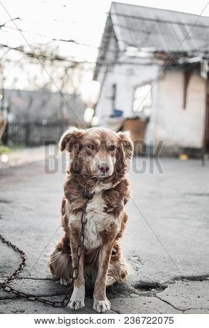 Portrait Of Cute Chained Brown Or Red Dog Sitting On Old Village Yard With Old House And Fence. Blur
