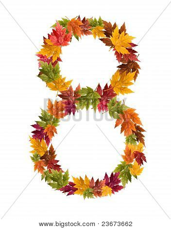 The number 8 made from autumn maple tree leaves