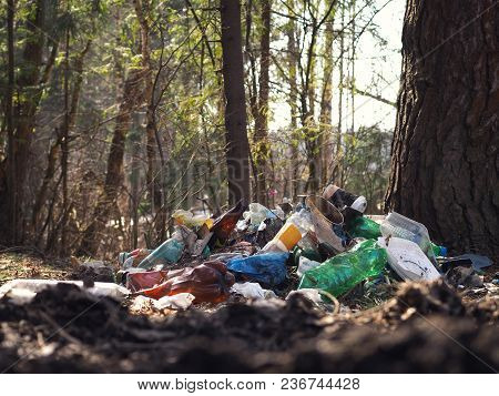Garbage Dump In The Woods. Plastic Containers That Pollute The Environment. The Problem Of Waste Dis