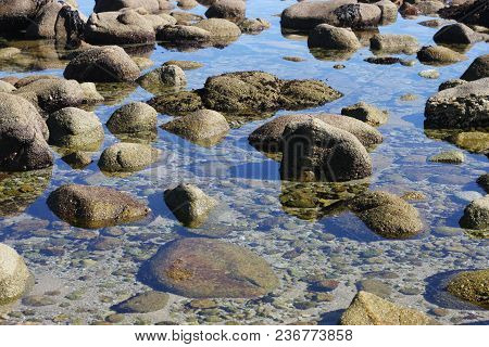 This Is An Image Of A Tide Pool Along The Coast Of Pacific Grove, California.