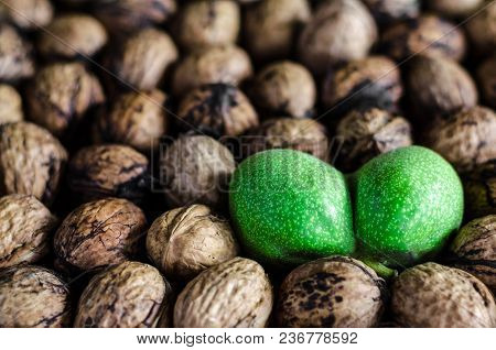 A Lot Of Textured Peeled Walnuts And One Double Green