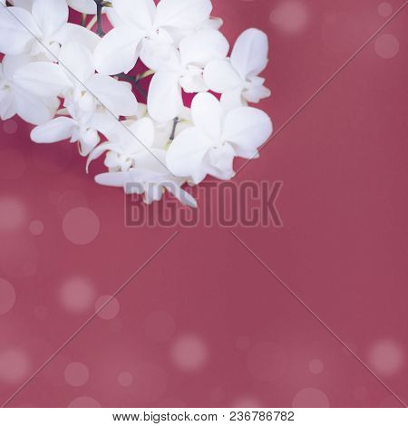 White Orchid On Red Background. Top View Copy Space For Your Text