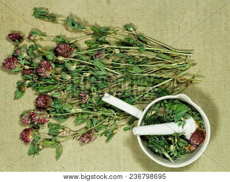 Clover, Trefoil. Dry Herbs For Use In Alternative Medicine, Phytotherapy, Spa, Herbal Cosmetics. Pre