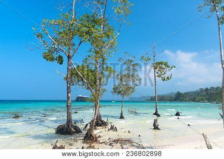 Stunning View Of Havelock Island Beach, Beautiful Tree In The Sea Water, Andaman Nicobar Islands.