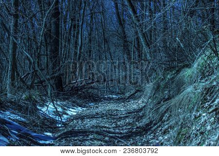 Magical Path Leads Into The Wilderness Of The Night Forest Exciting And Beautifully Dark Blue Sky Th