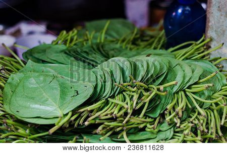 Betel Pan Leaves Stacked For Sale In Market In India