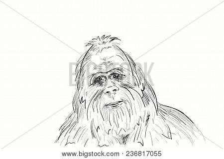 Portrait Of The Legendary Bigfoot. Yeti Is A Mysterious Humanoid Creature Survived Since Prehistoric