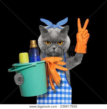 Cat In Apron Doing Household Chores. Isolated On Black Background