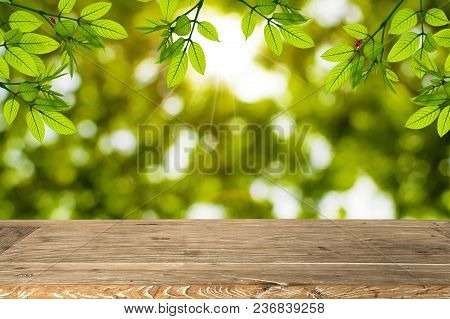 Empty Wooden Table For Display Product And Green Leaves Hanging For Background.