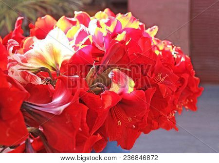Vase With Amaryllis Blossoms, Red And Yellow, Close-up, On A Market