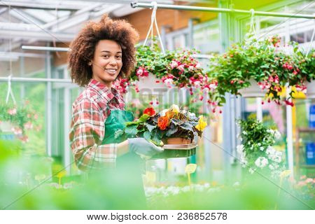 Side view of a dedicated florist holding a tray with decorative potted flowers while working in a modern flower shop with various houseplants for sale