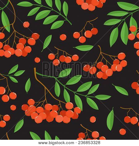 Branch Of Ashberries Isolated On Black. Seamless Pattern With Color Mountain Ashes. Bright Berries B