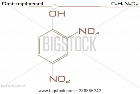 Large And Detailed Infographic Of The Molecule Of Dinitrophenol.