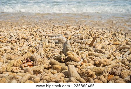 Soft Wave Of The Sea On The Sandy Beach With Dead Corals. White Foam Waves Of The Sea Covering The C