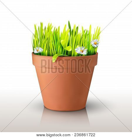 Grass And Chamomile In A Clay Peat Pot Isolated On White Background. Realistic Mesh Design. Vector I