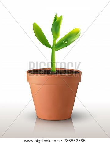 Single Green Realistic Sprout In A Pot Isolated On Green Backgrond. Vector Illustration. For Poster,
